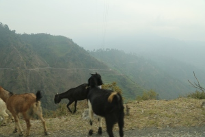 Winding road into Western Nepal with goats the only ones able to navigate the precipice © Donatella Lorch