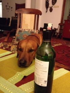 To cheer us up, we even put Biko, our eccentric Rhodesian Ridgeback on FaceTime. © Donatella Lorch