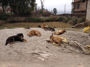 Stray dogs in mid-morning, sleeping during the daytime hours. ©Donatella Lorch