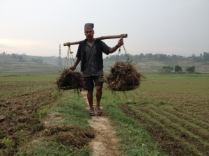 A farmer carries manure to his fields. © Donatella Lorch