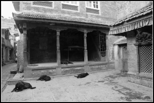 Stray dogs happily sleeping the day away ©Donatella Lorch
