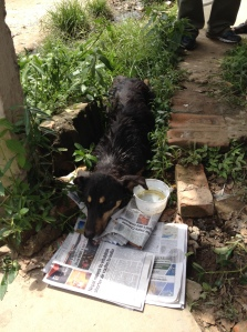 Raksi was lying in a ditch whimpering and unable to move. ©Donatella Lorch
