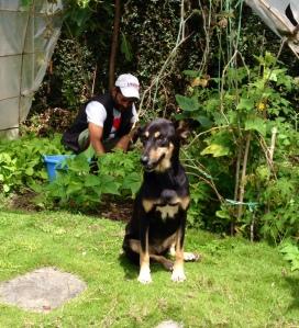 Within two days of moving in, Raksi was  walking around our garden. ©Donatella Lorch