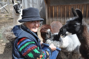 Mina feeding her daughter Lavinia's Llamas and alpacas. 2013. © Lavinia Lorch