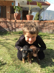 Lucas with two of Kali's nine puppies, stray dogs we rescued on our street. Now at the Kathmandu Animal Treatment Centre. ©Donatella Lorch