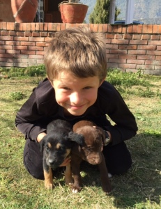 My son, Lucas, with two of Kali's nine puppies. ©Donatella Lorch