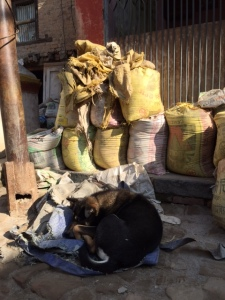 A stray dog sleeping off the winter chill in the Kathmandu Valley. ©Donatella Lorch