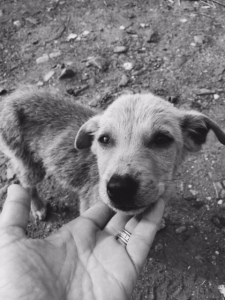More than 50 percent of stray dog puppies do not survive past their  first six months. ©Donatella Lorch